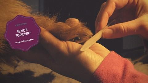 Krallen schneiden beim Hund – finde deine Methode!