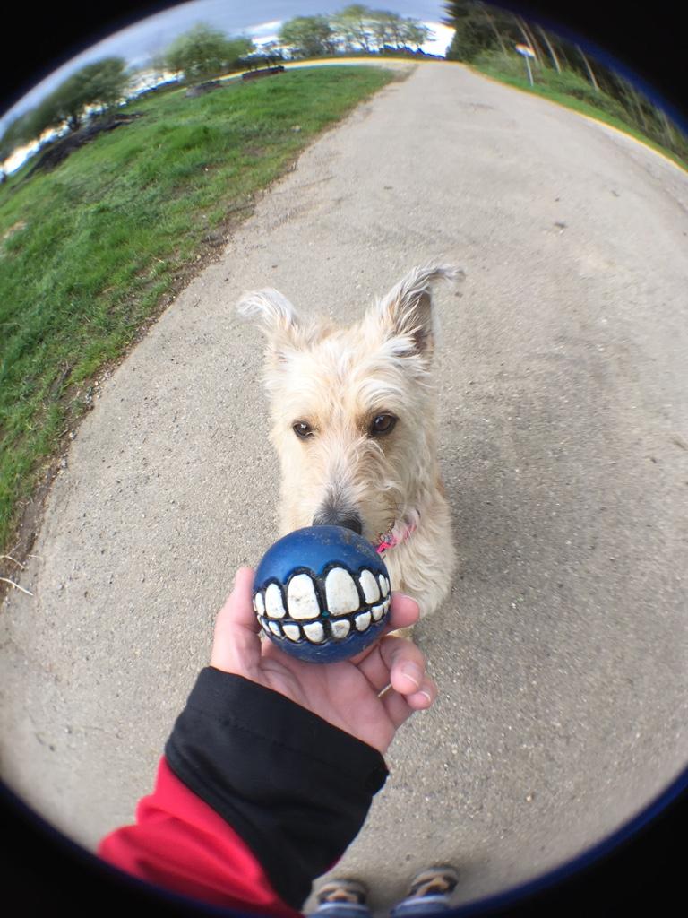 Balljunkie Hund Wuschelmädchen