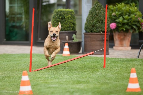 Wie Crossdogging die Beziehung zu meinem Hund stärkt