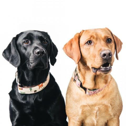 Wunderhübsche Sets von Hundeklunker