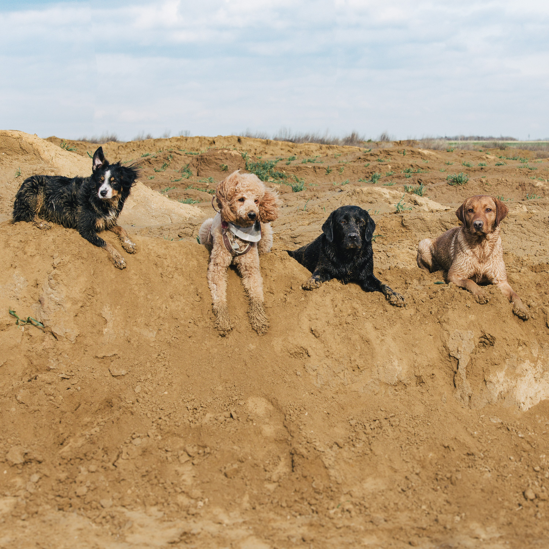 Hunde verbinden Hundefotografie