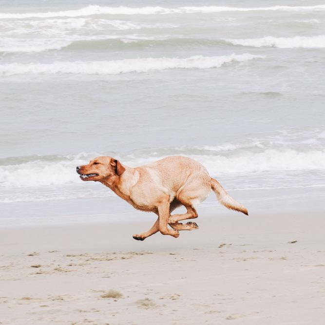Hundefotografie Einführung