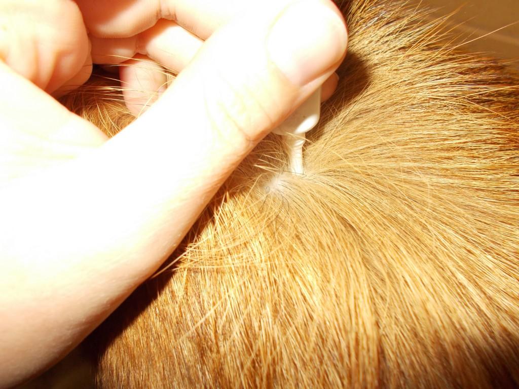 Zeckenmittel Hundeblog miDoggy