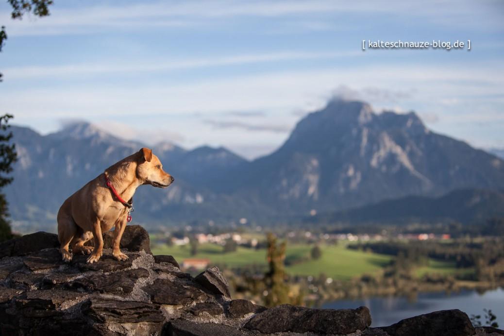Hopfensee mit Hund