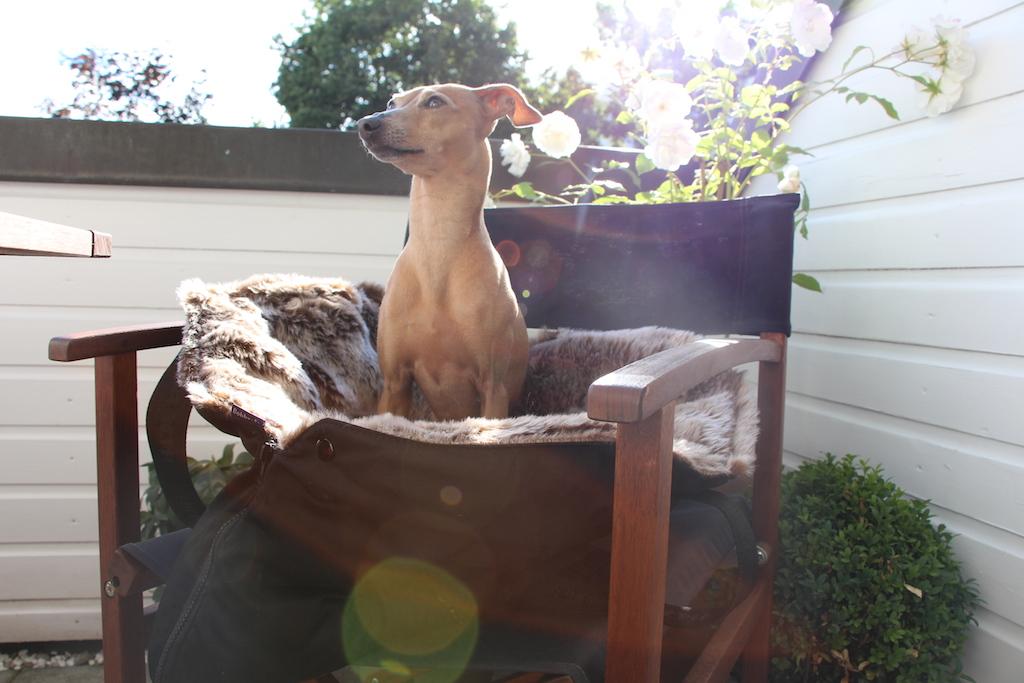 Hundetasche - Hundeblog miDoggy