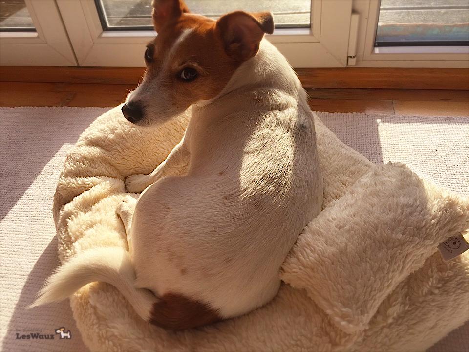 Körbchen Hundeblog miDoggy