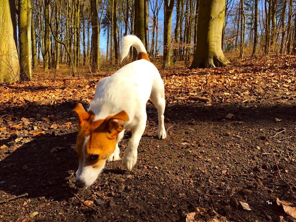 Hund Hundeblog miDoggy