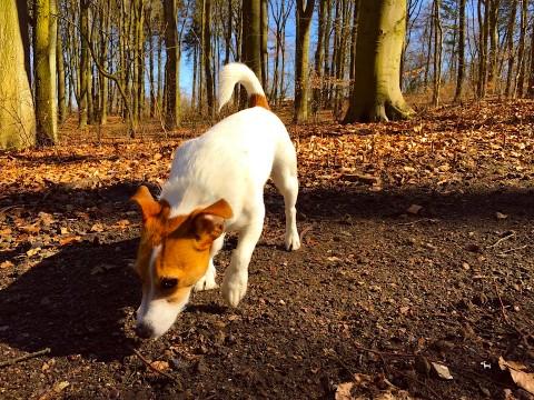 Training mit einem ängstlichen Hund: die Methoden im Detail