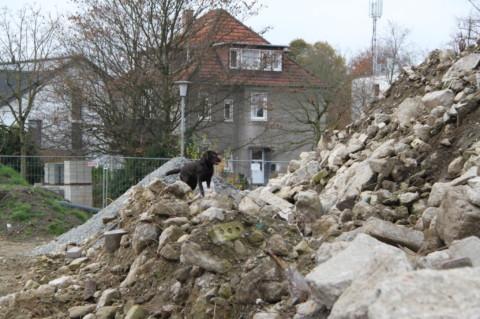 Ringos erstes Abenteuer als werdender Rettungshund