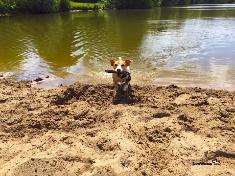 Das Terrier-Testlabor: Welches Schwimmspielzeug können wir empfehlen?