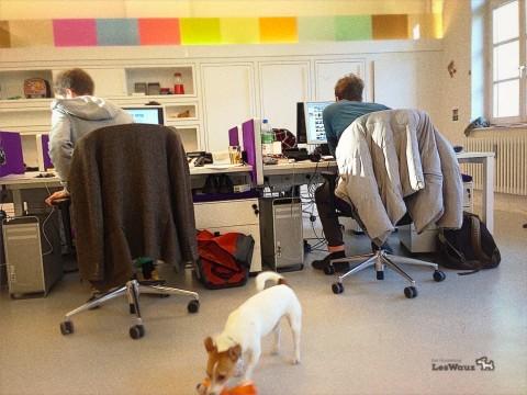 Der Hund im Büro oder doch lieber beim Hundesitter: wie ist das bei uns?