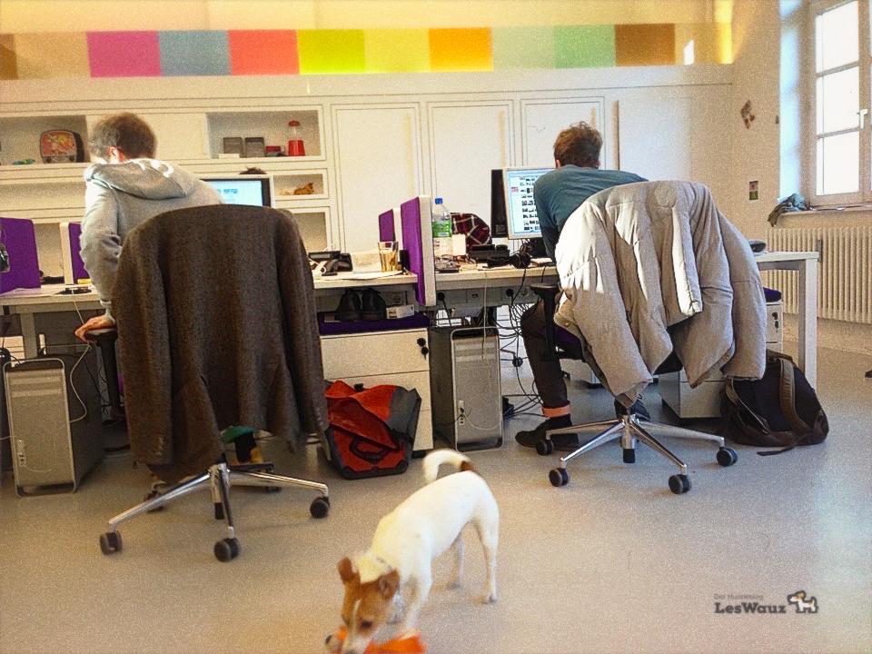 Hund im Büro Hundeblog miDoggy