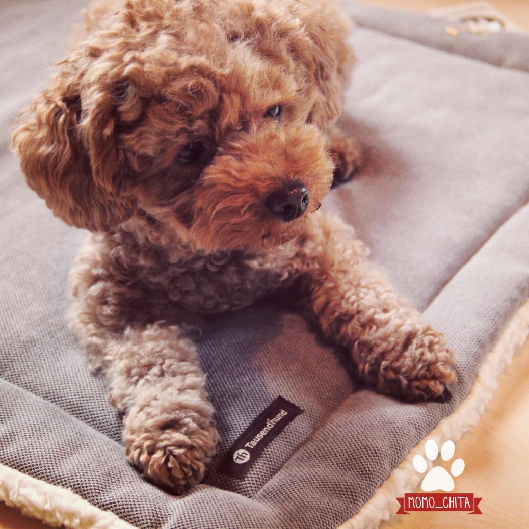 Kuscheldecke Tausendhund Erfahrung Test Hundeblog miDoggy