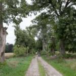 Kleiner Boitzenburger Wanderweg mit Hund