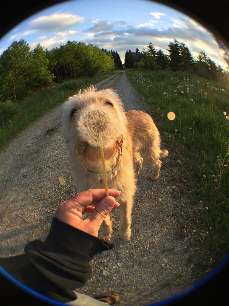 Liebster Award Hund miDoggy