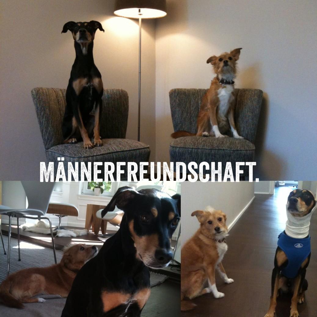 Männerfreundschaft unter Hunden