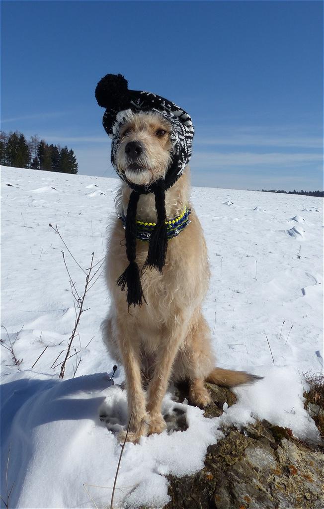 Mütze Hund Hundeblog miDoggy