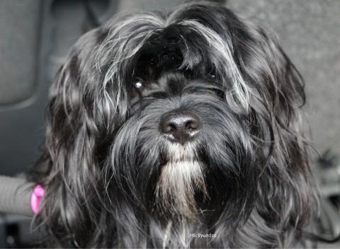 Beruf und Hund – Das Indiandermädchen Emmely