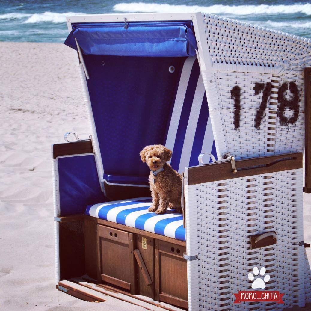 Urlaub mit Hund Sylt