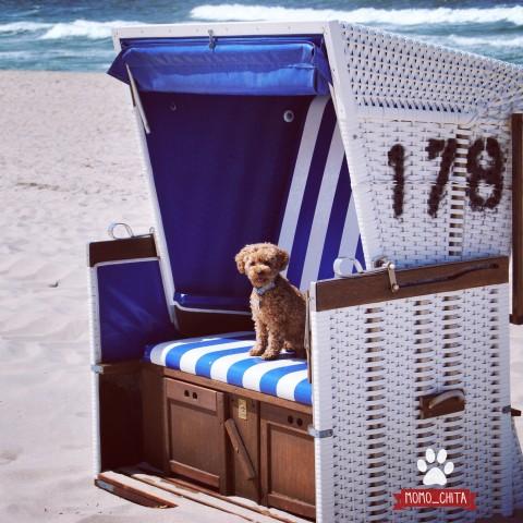 Hundeurlaub auf Sylt