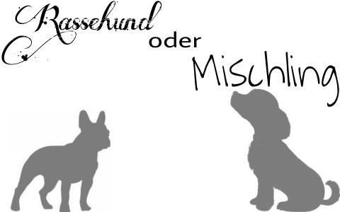 Gastbeitrag – Die deutsche Dogge