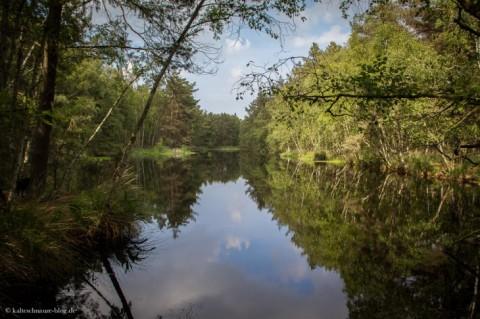 Ribnitzer Großes Moor: Von Torfgewinnung und Renaturierung