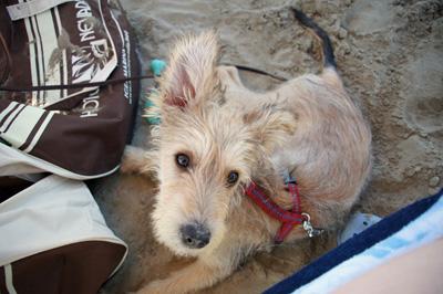 Webinar Hund Hundeblog miDoggy