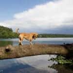 Wurlsee Lychen mit Hund
