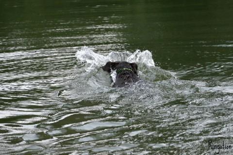 Homöopathie für Hunde – alles Quatsch oder wirklich wirksam?