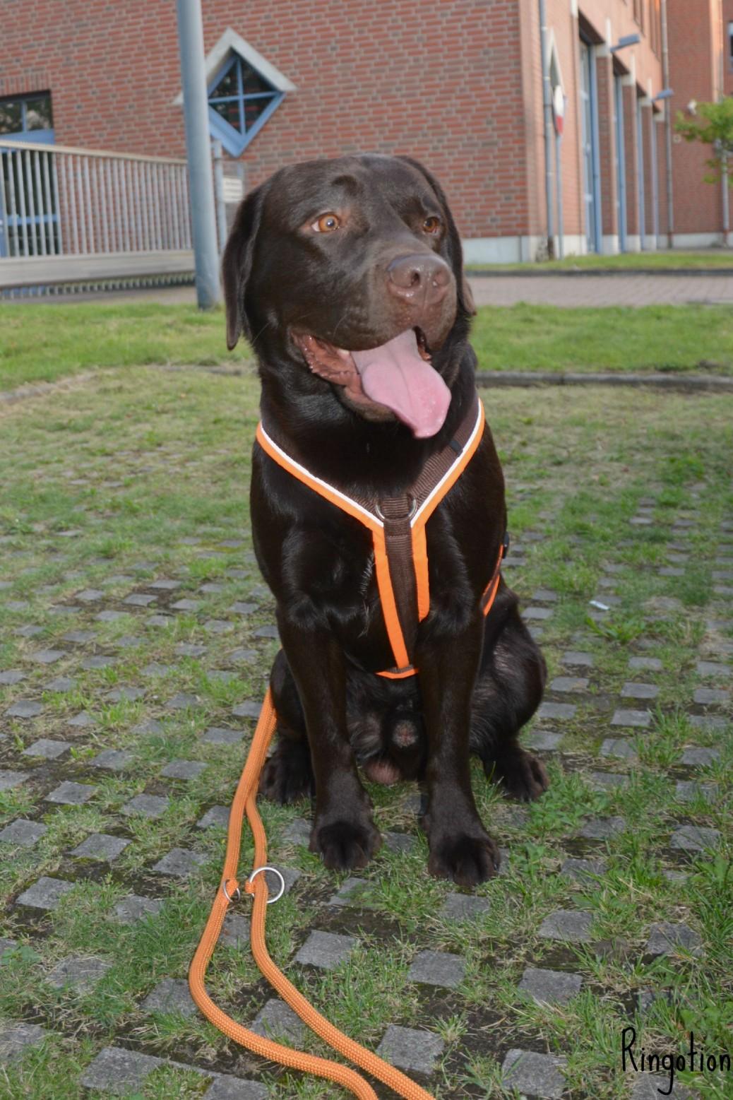 Rettungshund Ausbildung