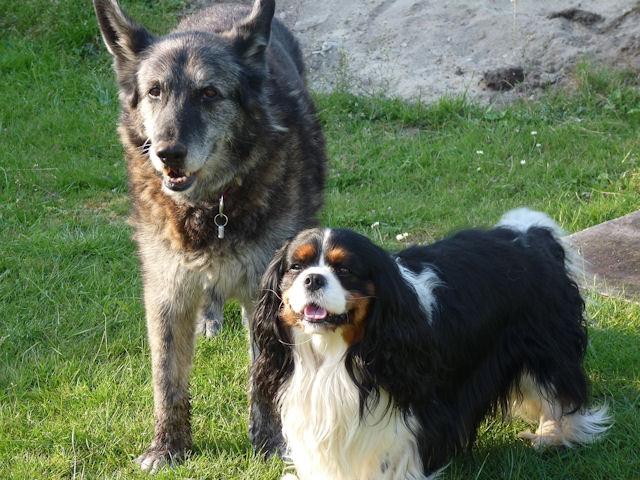 Interview Hundeblogger