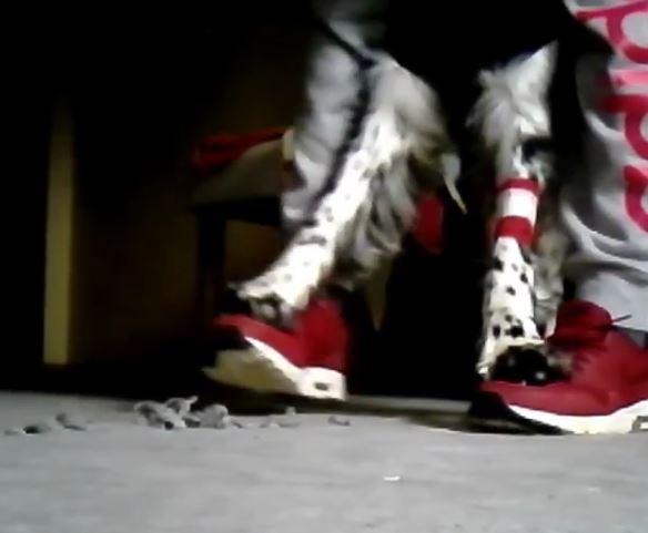 Trick Hund Füße laufen