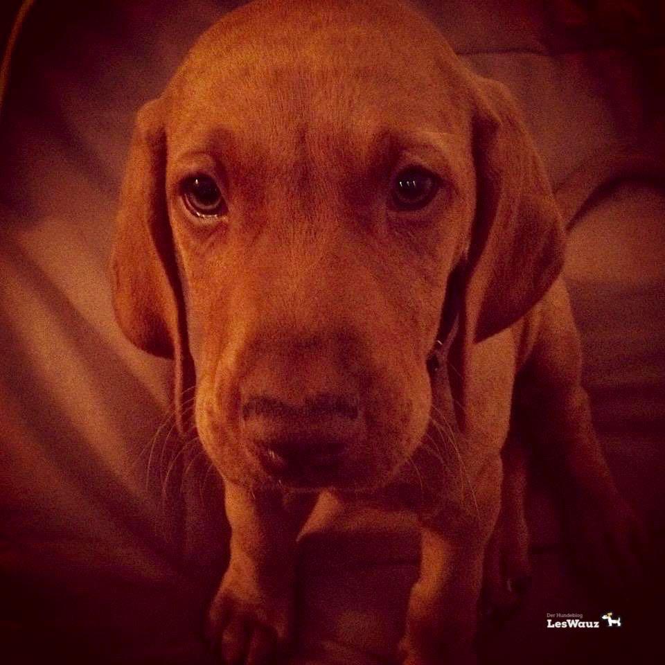 Welpe zieht ein Hundeblog miDoggy