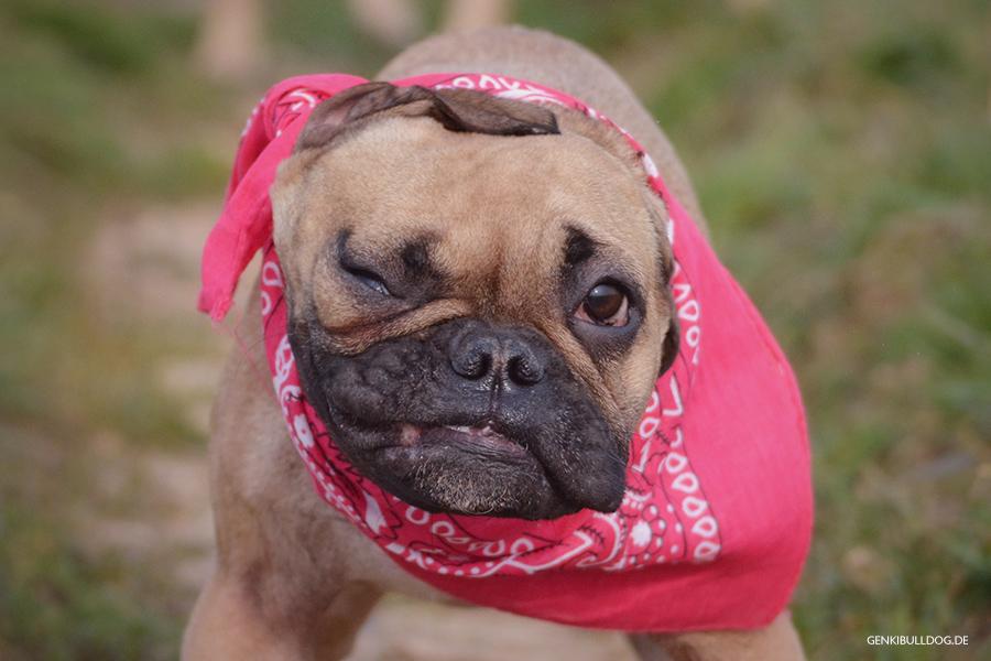 Lustige Hundebilder