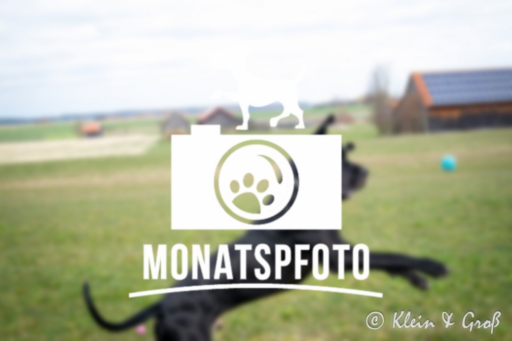 Monatspfoto Osterhase Hundeblogger