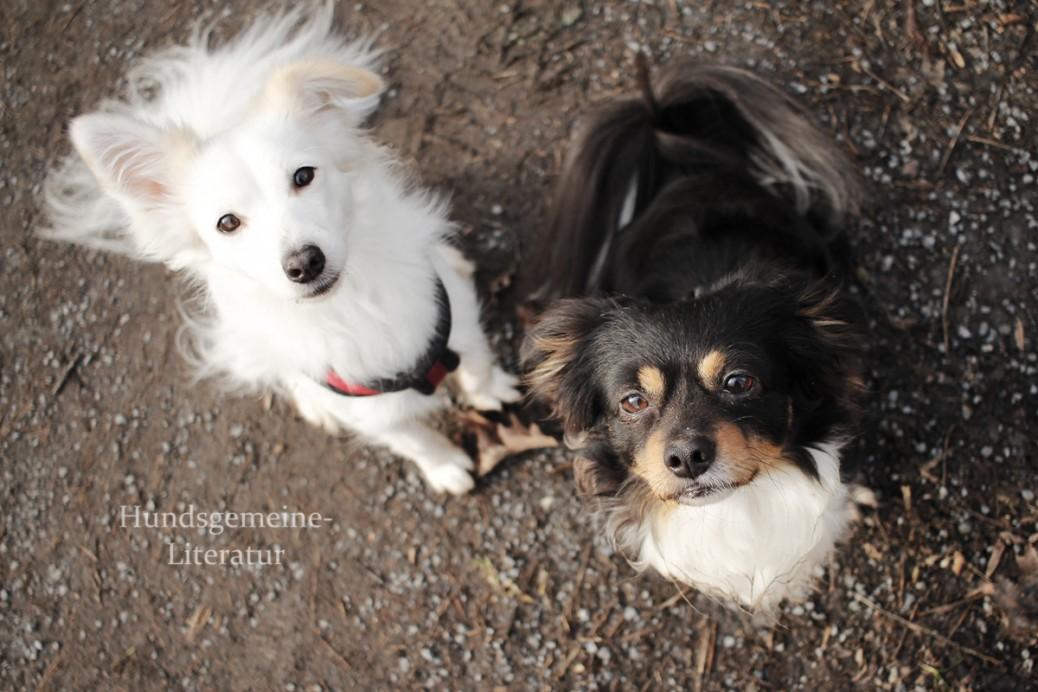 Verhaltensregeln gegenüber Hunden