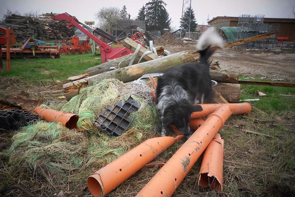 Zielobjektsuche Hundesport
