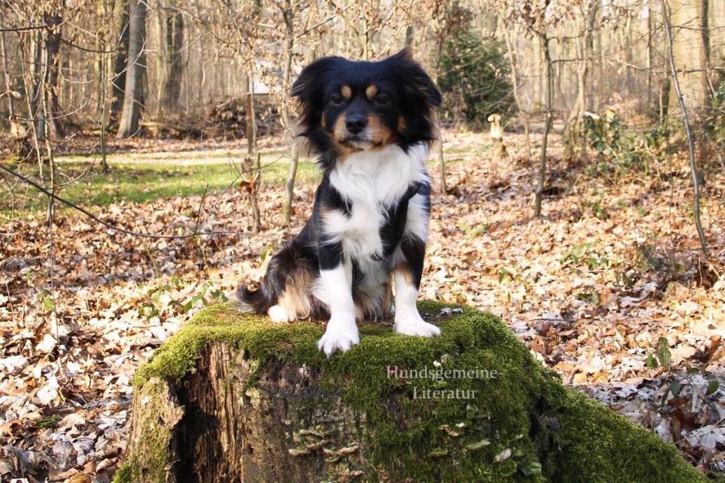 Kokoni Hundeblog