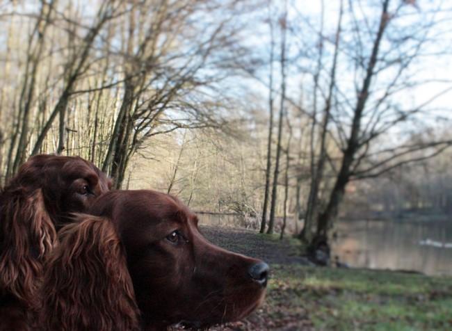 Aschaffenburg Hundepark Erfahrungen