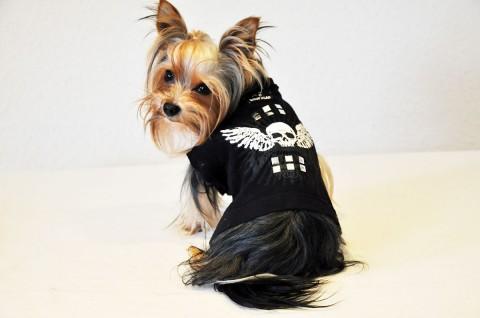 Vermenschlicht: Yorkshire Terrier Blanket