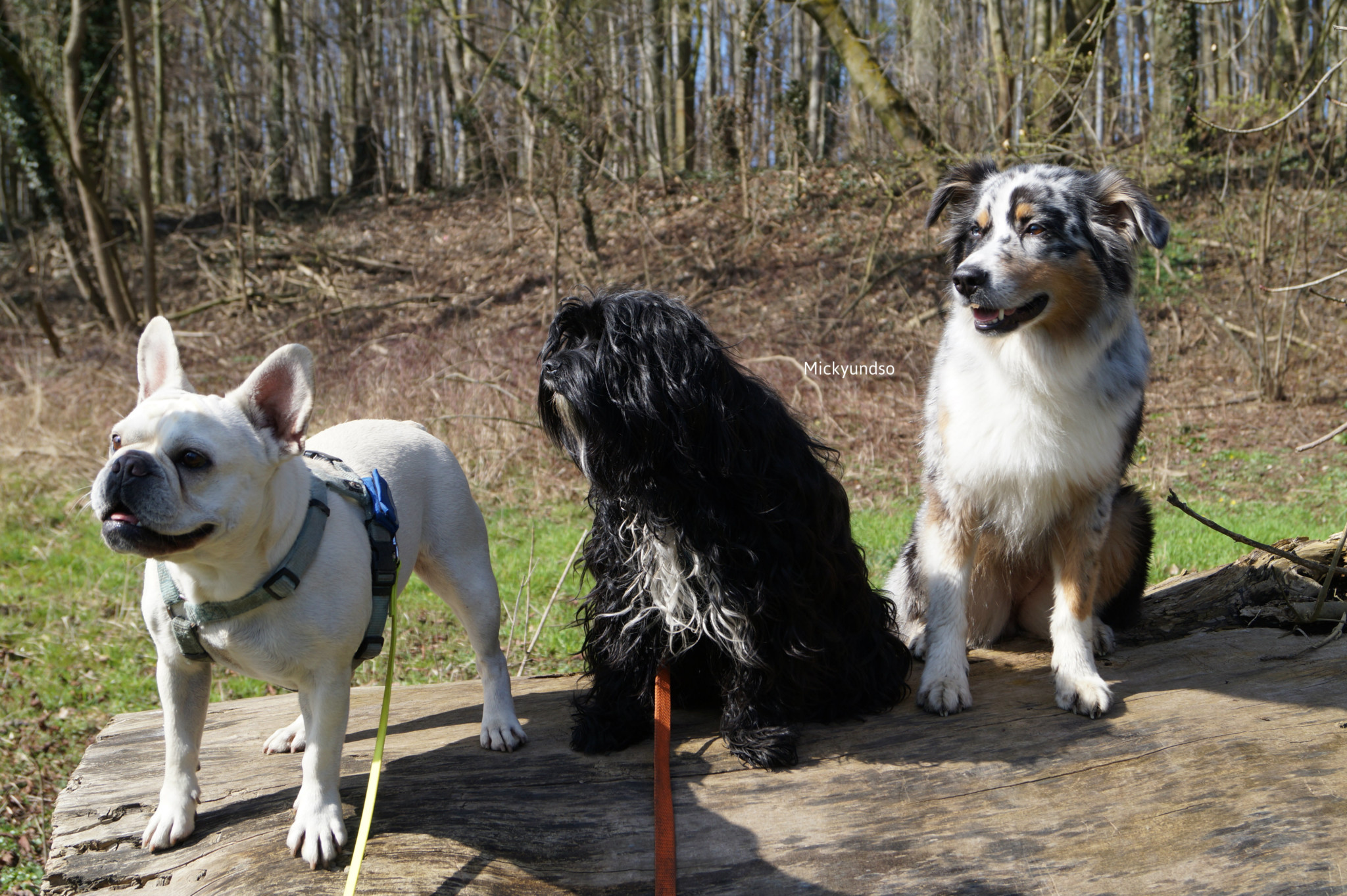 Hundeblogger miDoggy