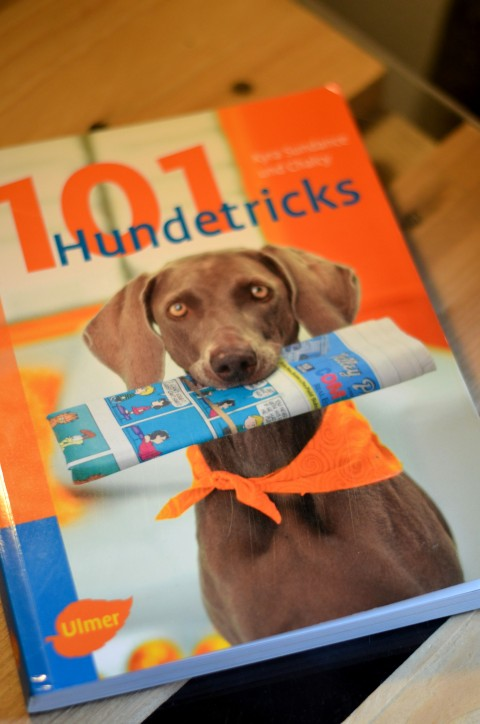 Schmökerzeit: 101 Hundetricks – Kyra Sundance und Chalcy