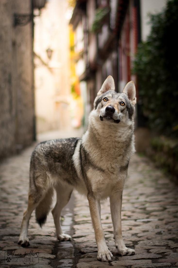 Manuelle Fotografie Hunde
