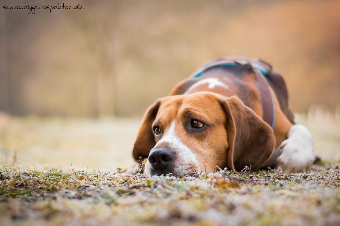Kamera Erfahrung Hundefotografie