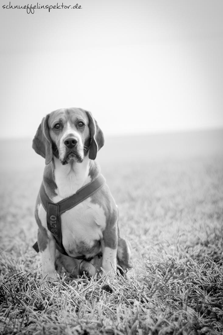 Wahl richtiges Objektiv Hundefotografie