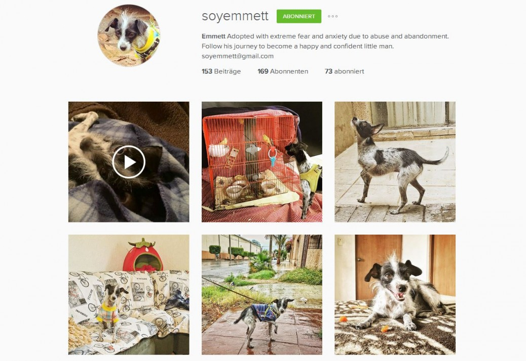 Instagram Hunde Accounts Empfehlung