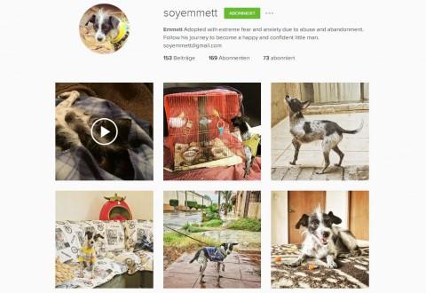 Best of 4 – unsere Instagram-Lieblingshunde