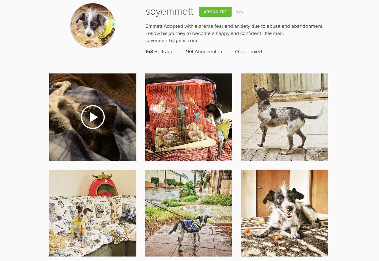 Instagram Hunde Accounts Empfehlung