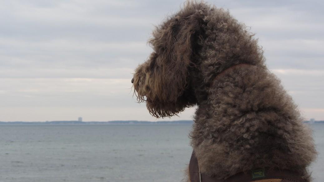 Urlaub mit Hund Ostsee Vergleich