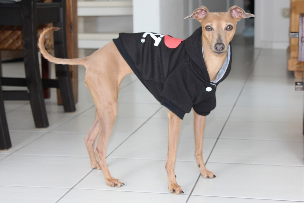 Lola Hundemantel NY